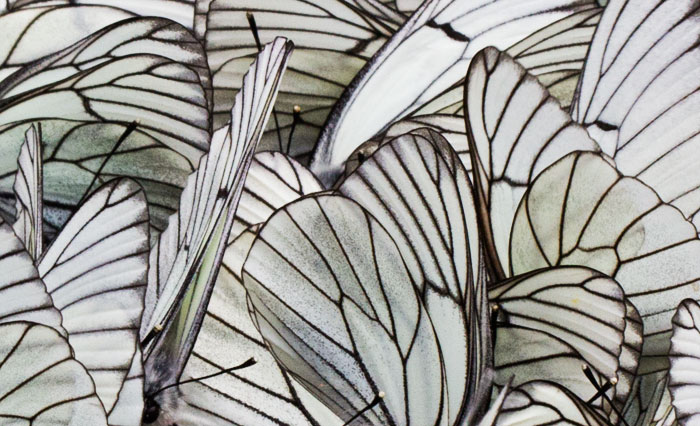 Image result for nature pattern